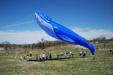 315spartanburg-Whale-kite